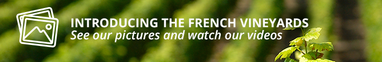 Introducing the French vineyards - See our pictures and watch our videos